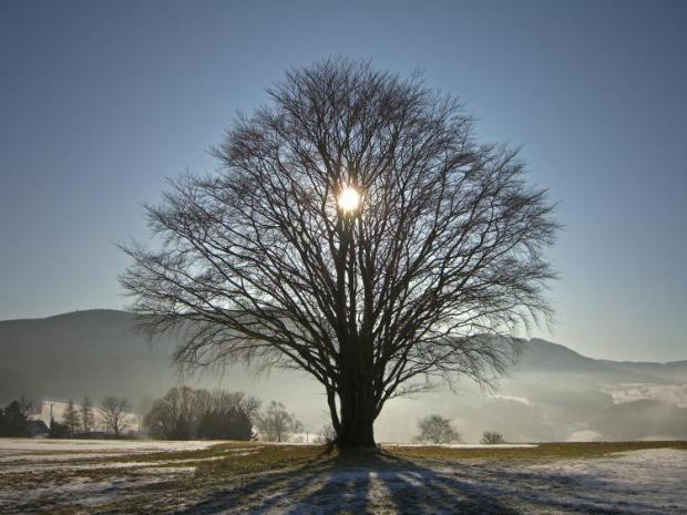 tree-winter